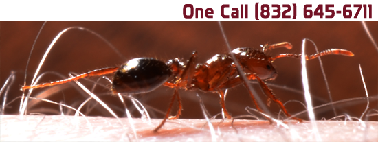 Target Pest Control Red Imported Fire Ants